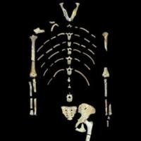 The famous partial skeleton of Lucy